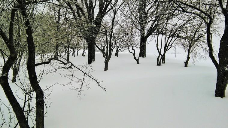 Tanah yang di musim panas dipenuhi rerumputan hijau kini tertutup salju...