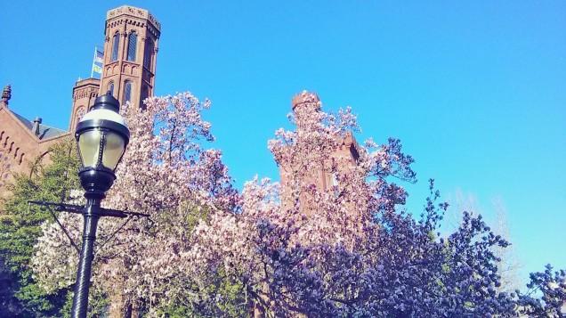Suasana bunga yang sudah mekar di Washinton, DC...